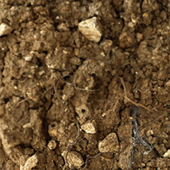 Soil from the Les Closeaux Vineyard