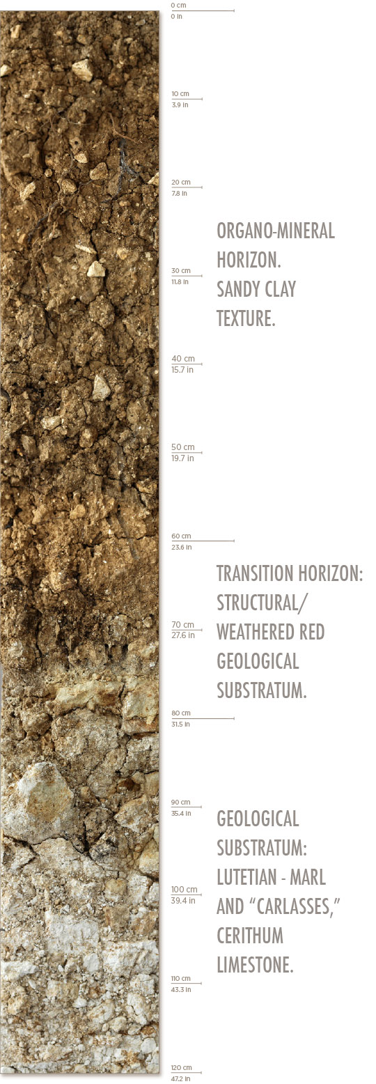 A description of the Les Hautes Blanches Vignes Vineyard soil from zero to 120 cm.
